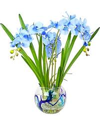 Round Flower Vases Fall Is Here Get This Deal On Blue Cybidium Orchid With Orchid