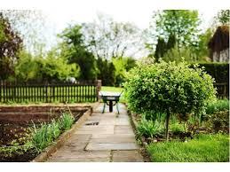 albero giardino da giardino tipi nomi e prezzi