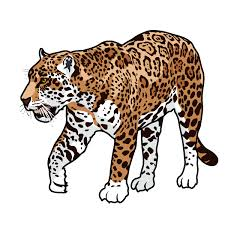 ocelot clipart rainforest animal pencil and in color ocelot