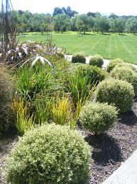 native nz plants rachel callaghan landscape architect nz upper plain garden