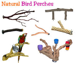 perch factory manzanita perch wood perches for birds