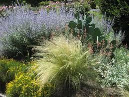 ornamental grasses u2013 la tejana trees