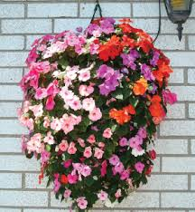 Hanging Flowers Hanging Flower Pouch Containers Urban Farmer Seeds