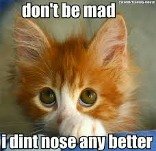 Mad Kitty Meme - how could you get mad at those eyes sweet babies pinterest