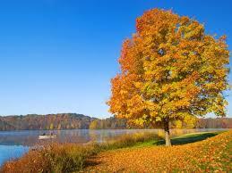 fond d ran de bureau images fond ecran 1280x1024 fond d écran paysage d automne