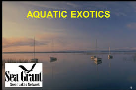 right in your own backyard aquatic exotics aquatic exotics are causing serious ecological and