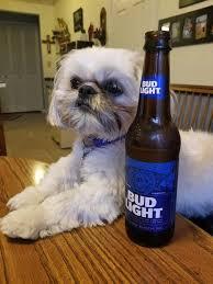 Dog Memes - dog memes home facebook
