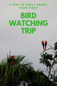 best 20 identify birds ideas on pinterest bird identification