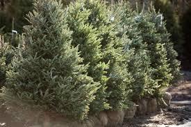 evergreen trees and shrubs