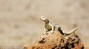 Seeking Episode 1 Lizard Ufo Claims To Spotted Lizard On Mars In Images From