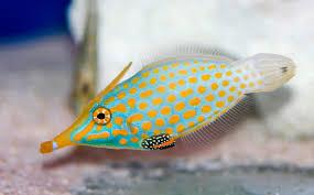 free stock photo 1215 saltwater tropical fish 2136 jpg