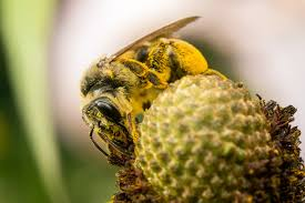you u0027re worrying about the wrong bees wired