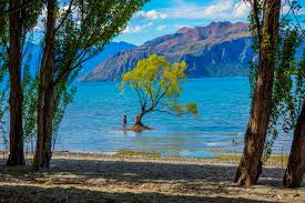 visiting the lone tree of wanaka in new zealand wandering and
