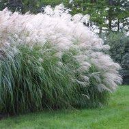 fescue grass i m obsessed i want this for my lawn