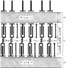 the twentieth century trajectory of plant biology cell