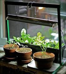 Herb Garden Winter - indoor garden apartment indoor herb garden grow light growing
