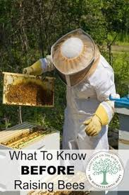 Raising Bees In Backyard by The 25 Best Raising Bees Ideas On Pinterest Beekeeping Bee