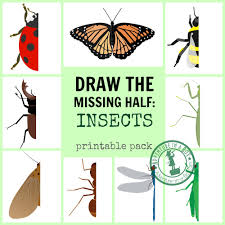 draw the missing half insects adventure in a box