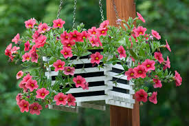 hanging basket plants for sun how to care for hanging plants