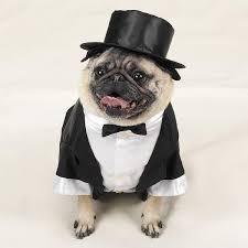 wide awake in wonderland dogs dressed for weddings