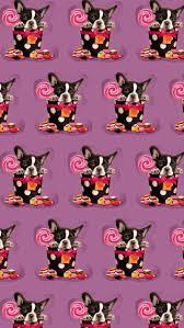 Boston Terrier Flag 433 Best All Things Boston Terrier Images On Pinterest Boston