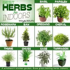 herbs to grow indoors beautiful stuff i love pinterest herbs
