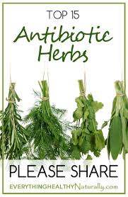 native american healing herbs plants herbal antibiotics using herbs to fight infection and speed