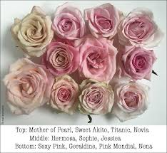wholesale roses pink study with amato wholesale flirty fleurs the florist