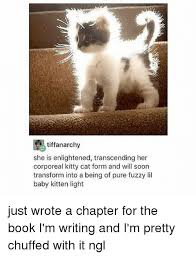 Kitty Cat Memes - 25 best memes about kitty cat kitty cat memes