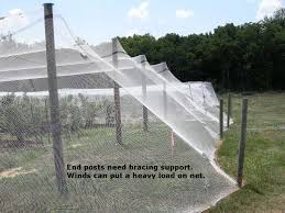 Vegetable Garden Netting Frame by Bird Netting Pictures And Ideas For Bramble And Blueberry