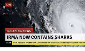 Breaking News Meme - live com breaking news irma now contains sharks 2148 new reports