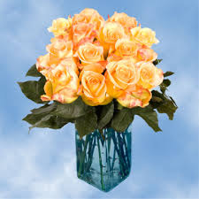yellow roses with tips yellow roses global