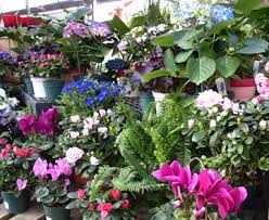 indoor plant display flowering plants for indoors