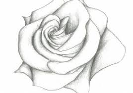 pencil sketches of rose 1000 images about roses on pinterest rose
