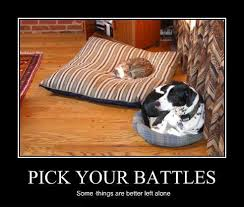 Dog In Bed Meme - pick your battles happens in my house all the time little dog
