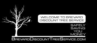 brevard discount tree service brevard s choice for safe tree service