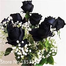 black roses for sale sale 100 black seeds beautiful stripe