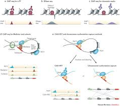 transcriptional enhancers from properties to genome wide