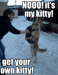 Bad Kitty Meme - get your own kitty dobrador cats huskies