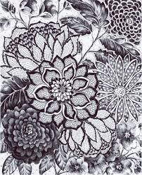 Flower Drawings Black And White - 43 best flowers images on pinterest botany botanical drawings