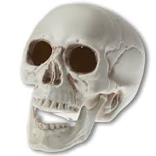 Cheap Skeletons For Halloween Amazon Com Prextex 6 5 Inch Realistic Looking Skeleton Skull For