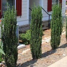 Ideas For Backyard Privacy by Triyae Com U003d Tall Backyard Privacy Ideas Various Design