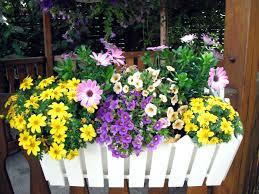 balkon grã npflanzen pflanzen pflanzenklick