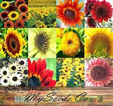 sunflower seed wedding favors 11 inexpensive garden themed wedding favors that your guests will
