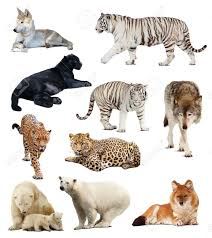 imagenes de animales carnivoros para imprimir imágenes de animales carnívoros descargar imágenes gratis