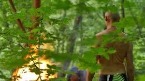 trees wind burn stock footage videoblocks