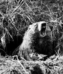 how groundhog day history involves eating the groundhog