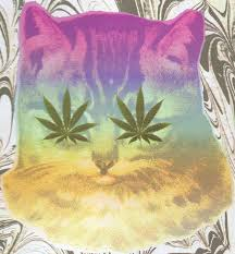 dogs and cats pros and cons comparing and contrasting and other catnip