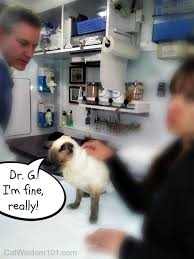 Creature Comforts Mobile Vet Mondays With Merlin Good Times Bad Times You Know I U0027ve Had My
