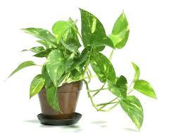 best indoor house plants indoor house trees indoor house plants names tropical best indoor